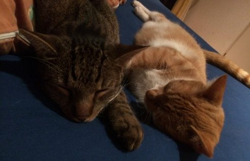 cat friends, Katzenfreunde