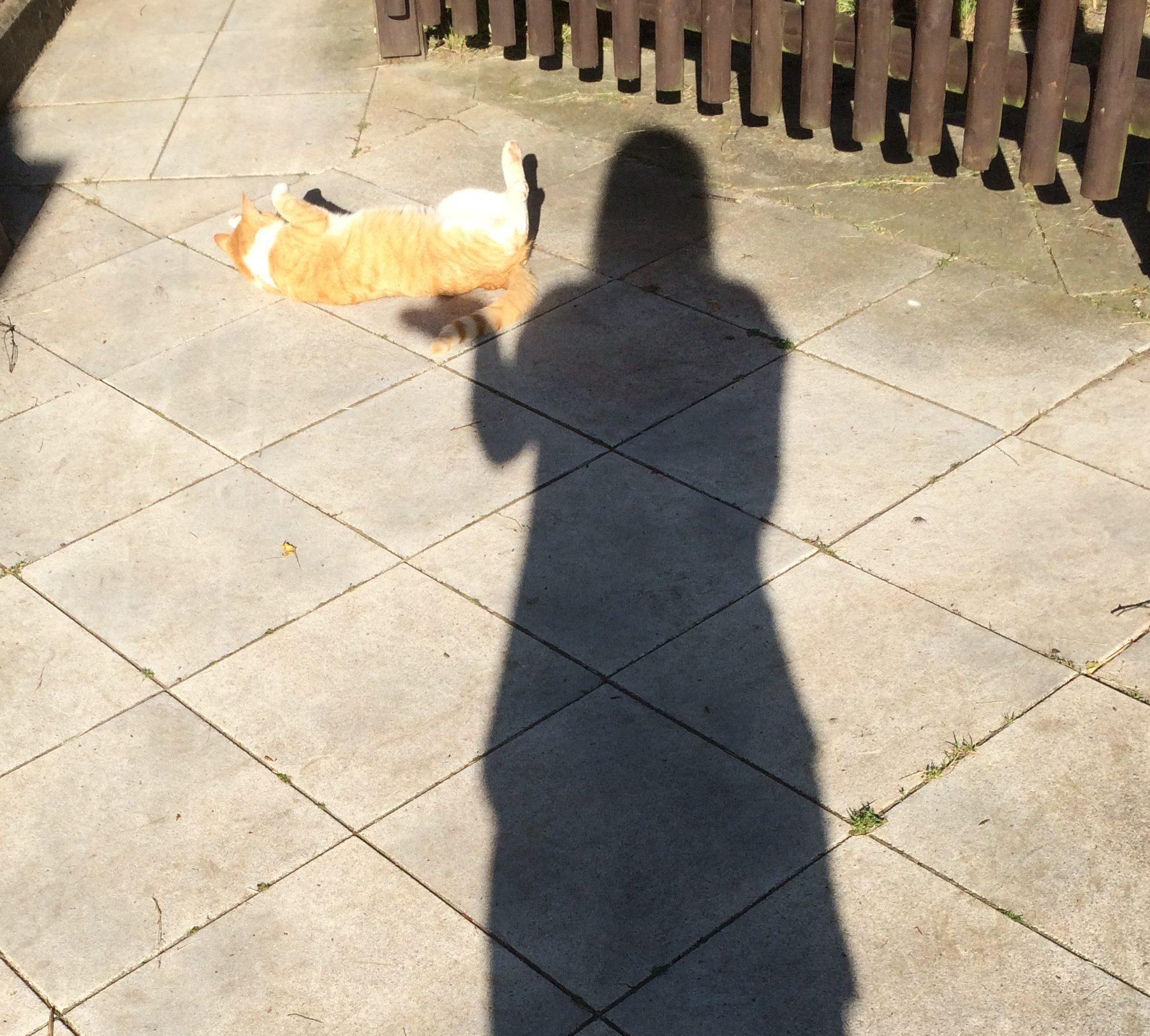 Katzenschatten
