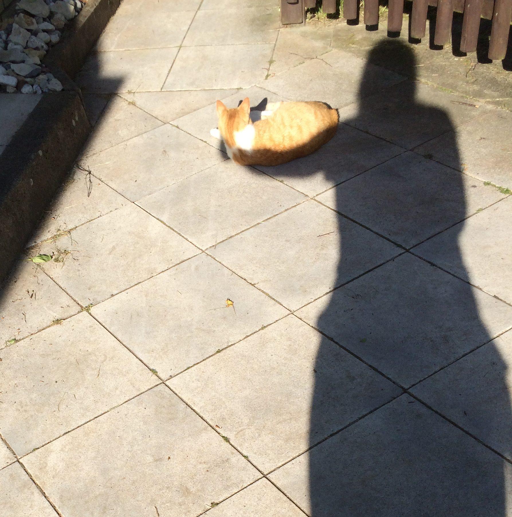 Schattenspiel mit Katze