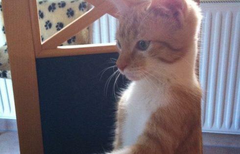 Bestellen bitte! #Katzen