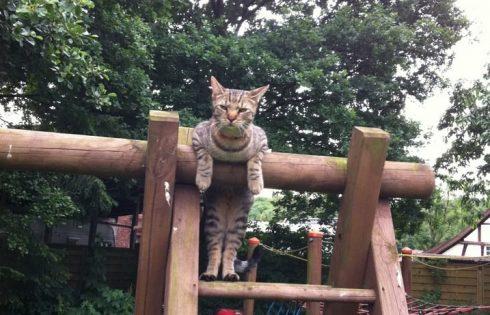 Katze auf Klettergerüst