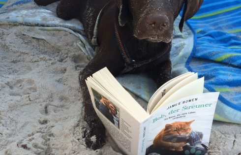 readingdog, Lesehund