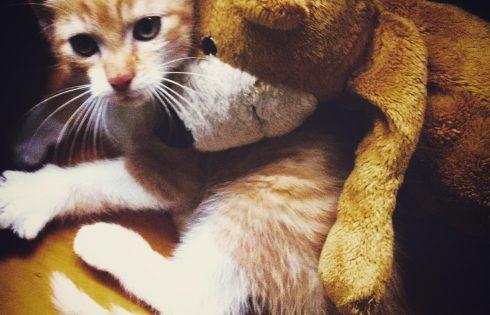kittyandpet, Katze mit Teddy