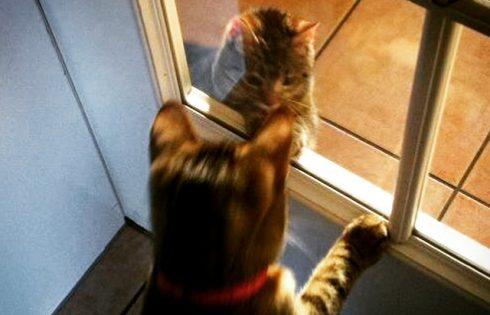hey du da, cats