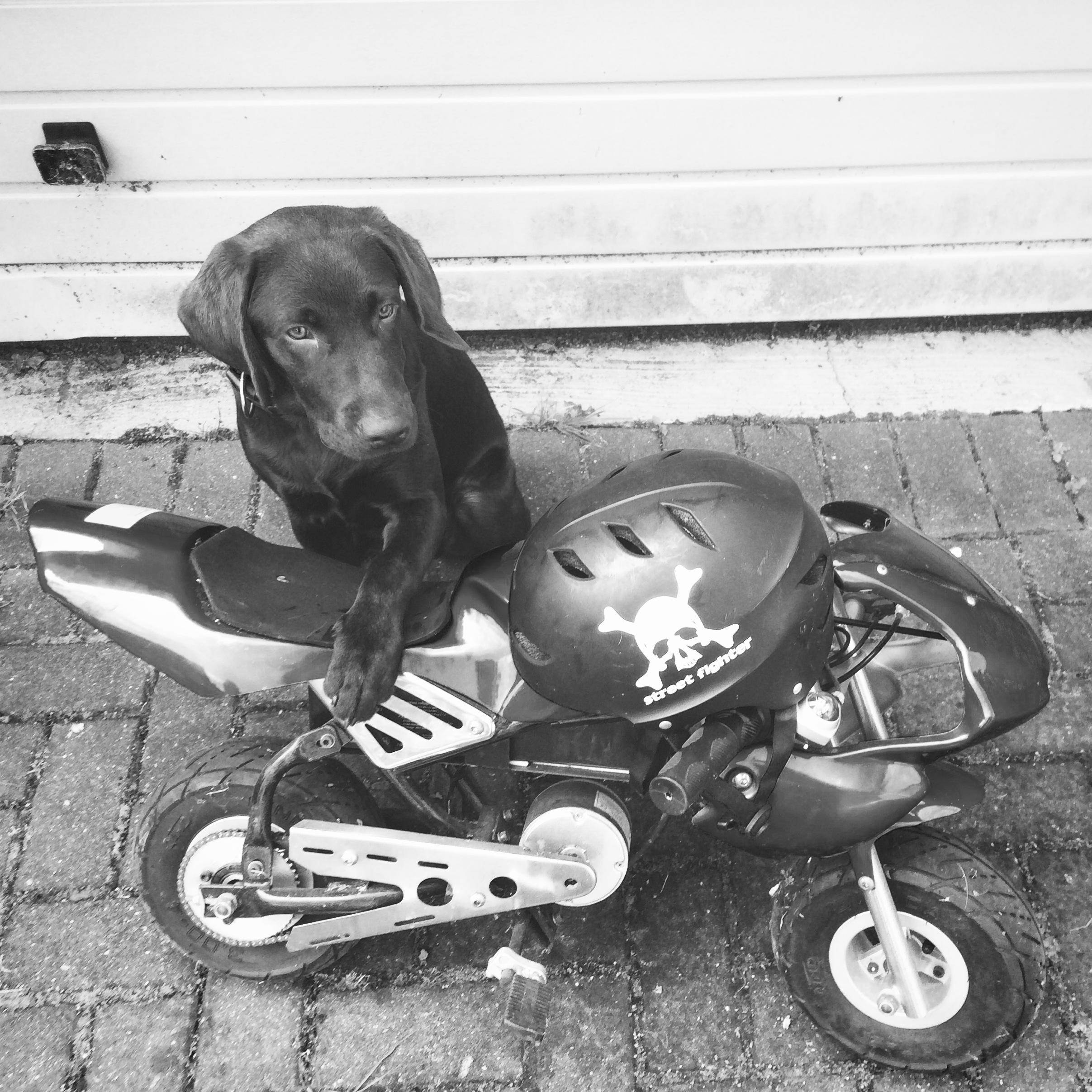 bikerdog