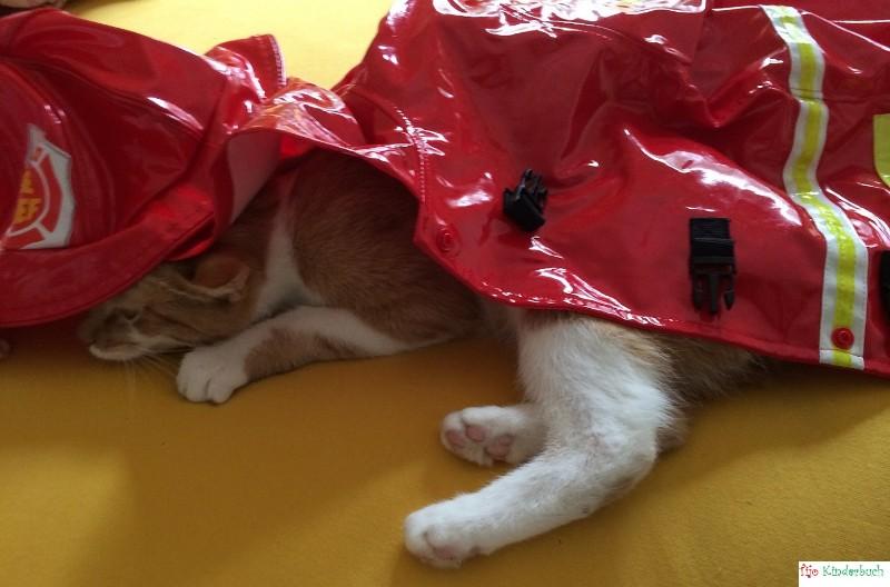 rainy day cat, Regenkatze