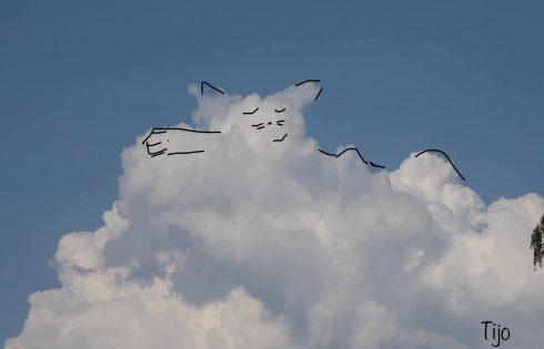 Wolkenkatze gemütlich