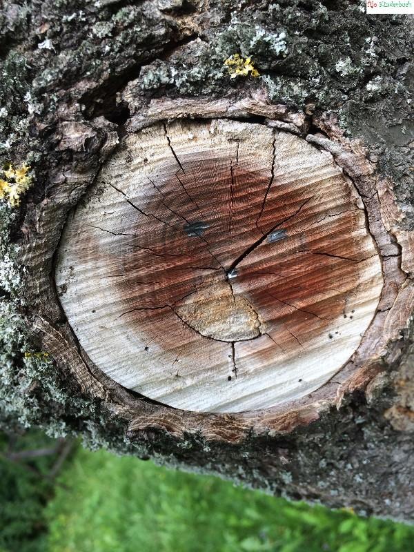 Baumgesicht, treeface