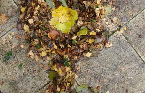 Herbstblätterblume