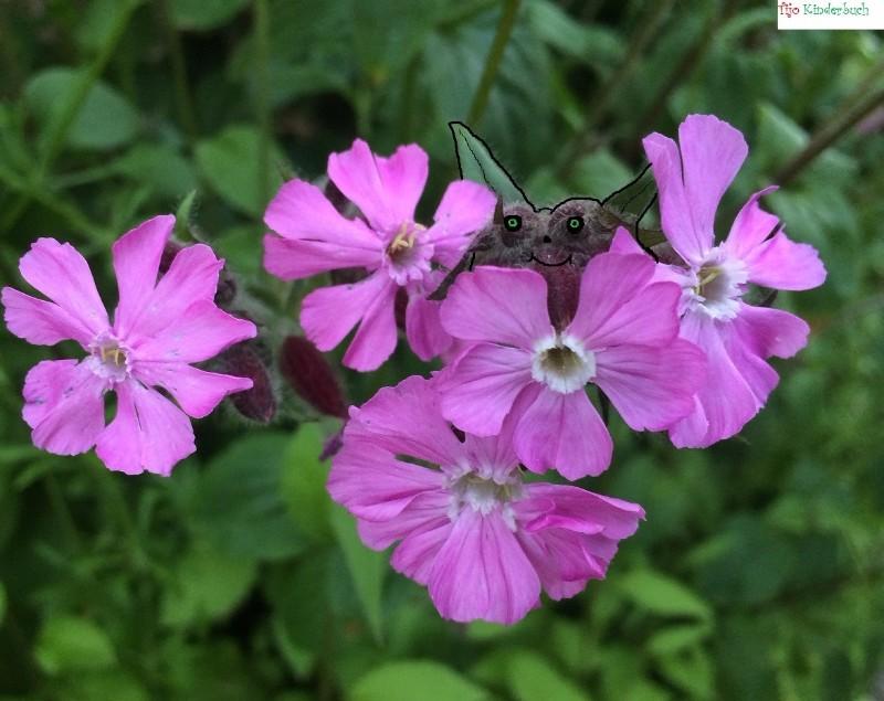 little flower monster