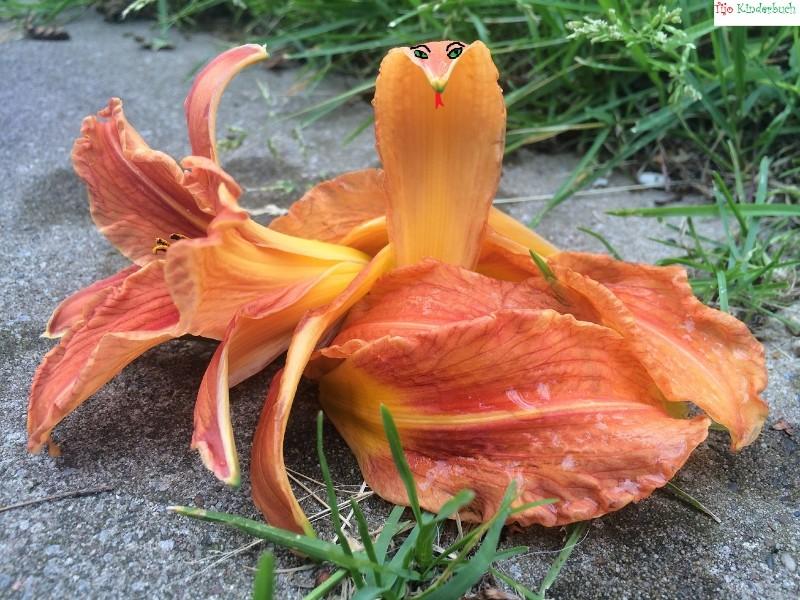 Blumenschlange, flowerart