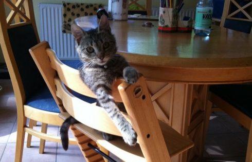 Katze, Bedienung!