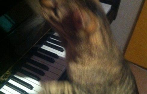 cat play piano, Pianokatze