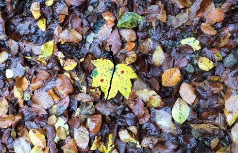 Herbstschmetterling