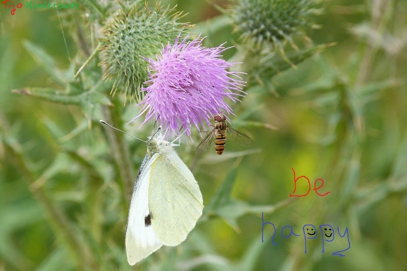 Schmetterling, be happy