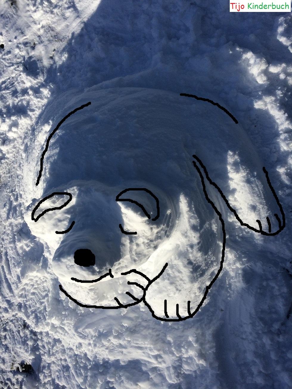 Eisbär, Polarbear