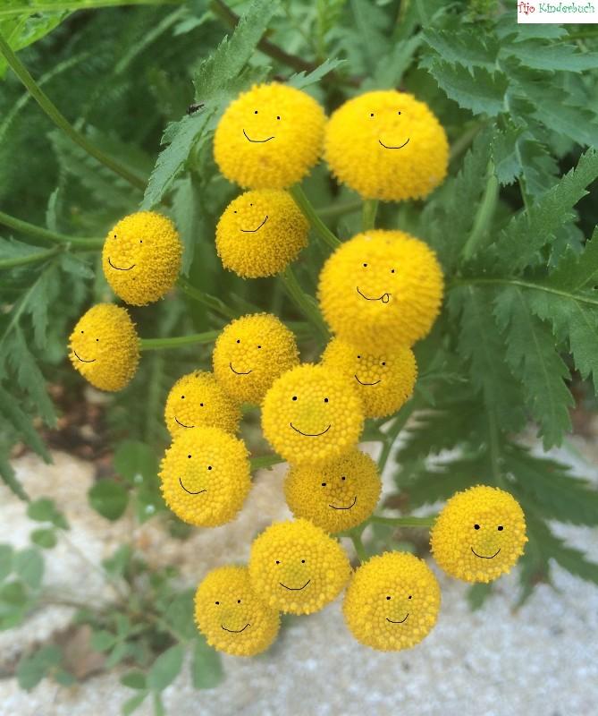 Smileyblumen