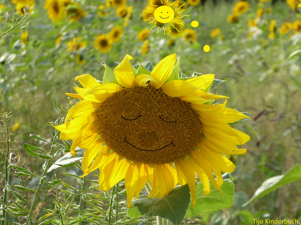 Sonnenblume sunny smile