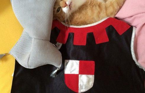 Sir Cat, Katzenritter