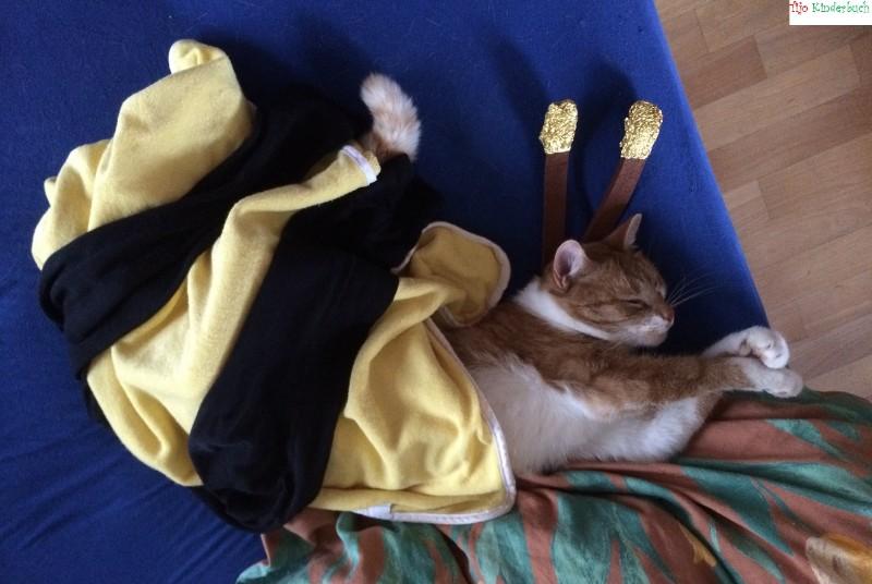 Cat bee, Katzenbiene