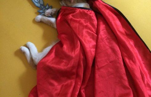 Zorro Katze