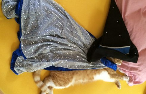 wizard cat, Katzenzauberer