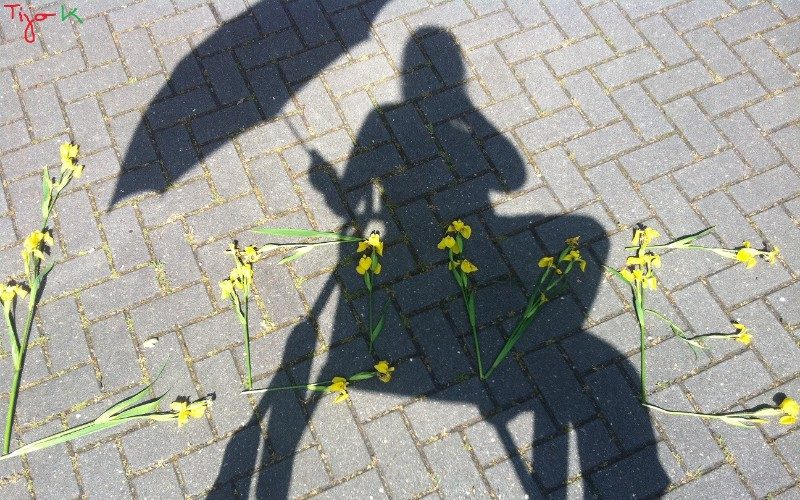 shadow love pic