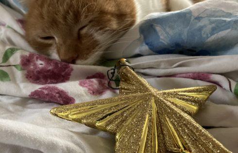 Katze mit Stern