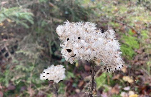 Pflanzenbärchen