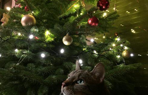 Katze am Tannenbaum